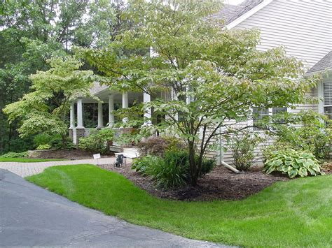 Landscape Trees And Shrubs Newsonair Org A 1 Landscaping