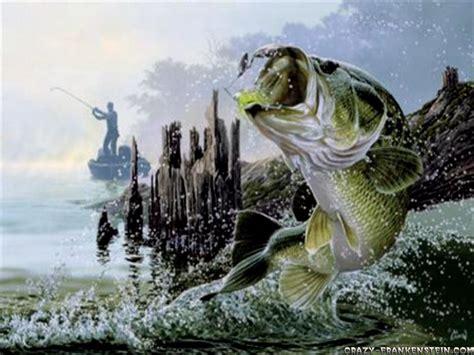 Bass Fisch by Bass Fish Backgrounds Www Pixshark Images