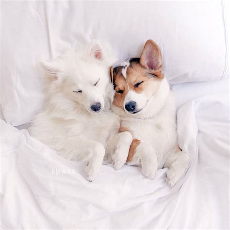 puppies cuddling 23 cuddling dogs who don t who s the big spoon and who s the spoon barkpost