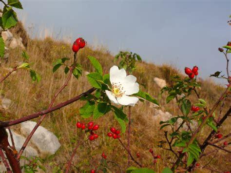 fiori d autunno fiori d autunno forum natura mediterraneo forum
