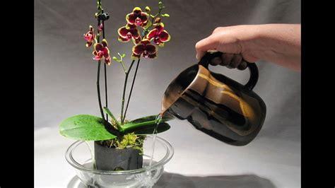 vasi per orchidee vasi per orchidee vasi