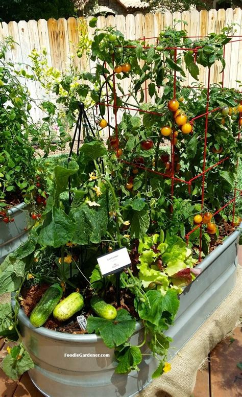 Container Vegetable Garden On Your Patio Gardencus Potted Vegetable Garden