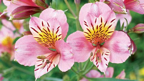 favorite perennial flowers sunset magazine sunset