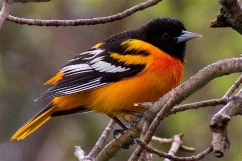 bird blogs bird blog birding blog archive a bit of