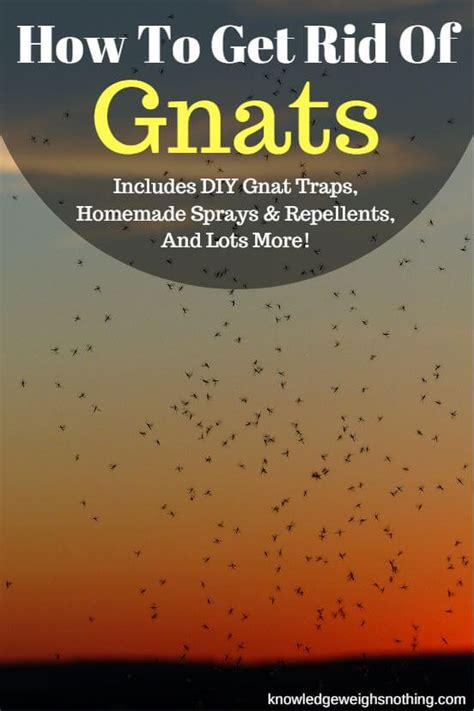 how to get rid of gnats in backyard homemade gnat trap 3 gnat traps 2 sprays to try