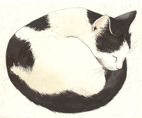 sketchbook cat air pin by jocelyn bridge on inspiration animals birds