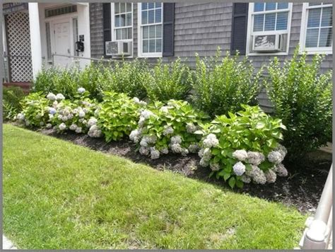 Landscape Pictures With Hydrangeas This Garden Picture Is Of A Simple Foundation Of Endless