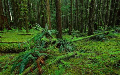forest trees moss fern nature y wallpaper 2560x1600