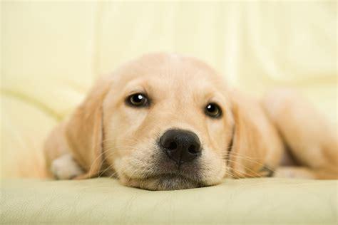 hund macht ins bett 10 skurrile hundenamen your hundemagazin
