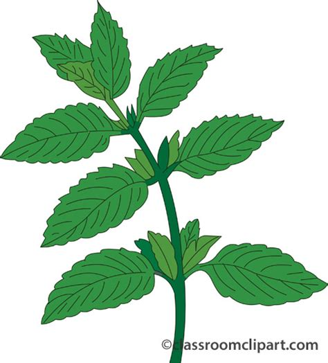 peppermint clip art peppermint plant clipart