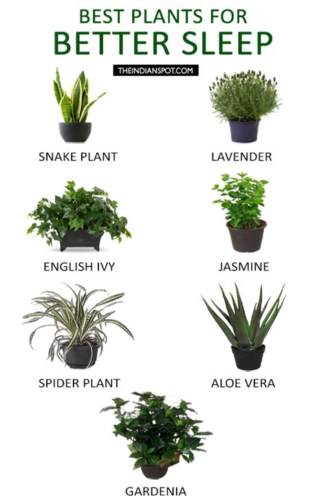 best indoor plant best houseplants to keep in your bedroom for better sleep