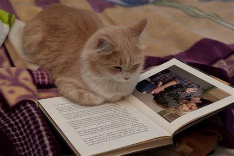 leer libro e un gato y un perro libros recomendados para amantes de los gatos