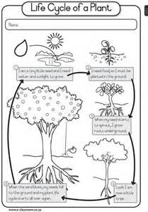 Plant Cycle Worksheet by Enggr1t3 Lifeskills Plantsseeds Plant Cycle Plants Cycling Plants And School
