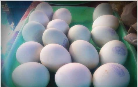 cara membuat telur asin untuk ujian praktek pembuatan dan manfaat telur asin jalan jalan makan makan