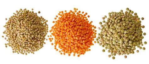 can dogs eat lentils lentils for dogs 101 can dogs eat lentils and are they safe