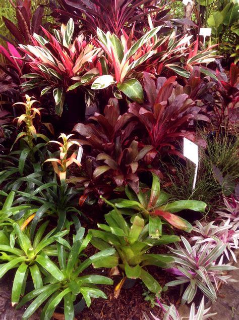 colorful shade plants colorful shade plants botanicals annuals perennials