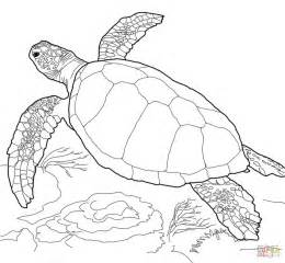 sea turtle coloring pages 301 moved permanently