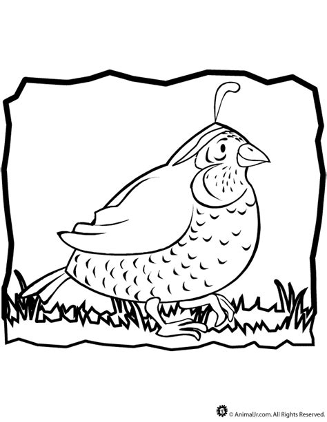 free coloring pages quail quail coloring page coloring home