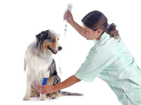 what is pancreatitis in dogs drovers vet hospital