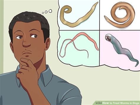 how to treat worms in puppies how to treat worms in dogs with pictures wikihow