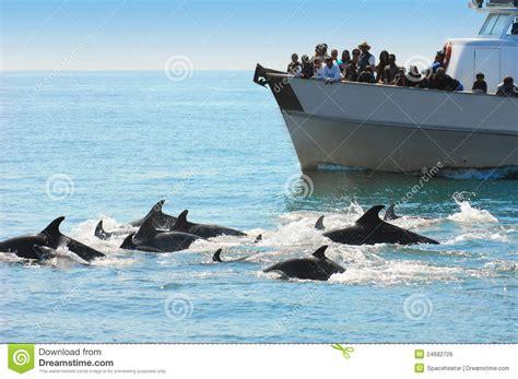 virginia aquarium dolphin watching boat trips dolphin watching editorial photo image 24682726