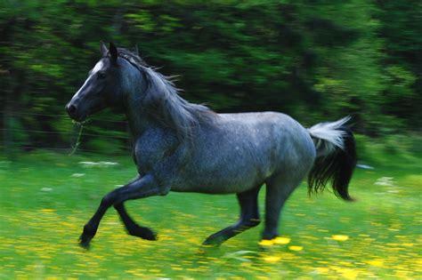 Nice Hourse by Open Pastures Werner Nokota Horses
