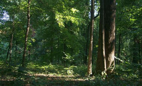 wesselman woods nature preserve visit evansville