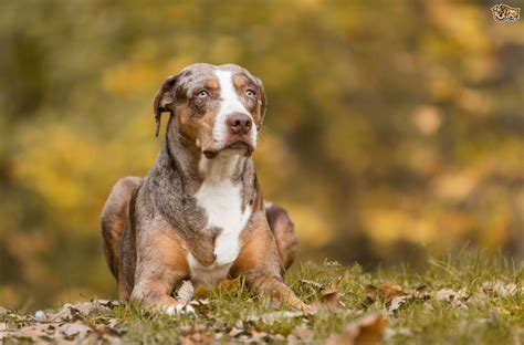 country puppies 7 breeds for country living pets4homes