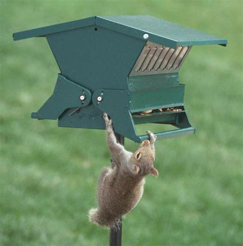 pole bird feeders squirrel proof