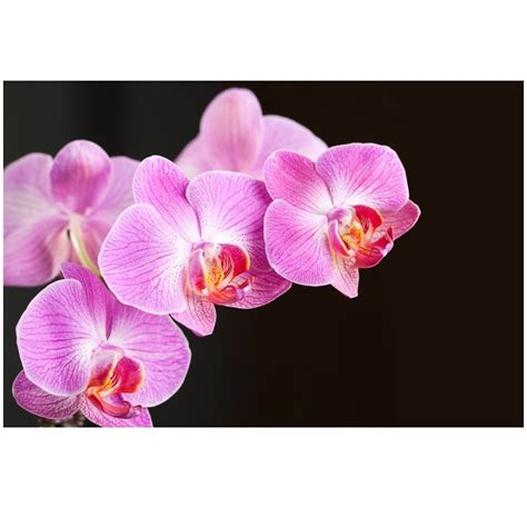fototapeta fioletowa orchidea do salonu