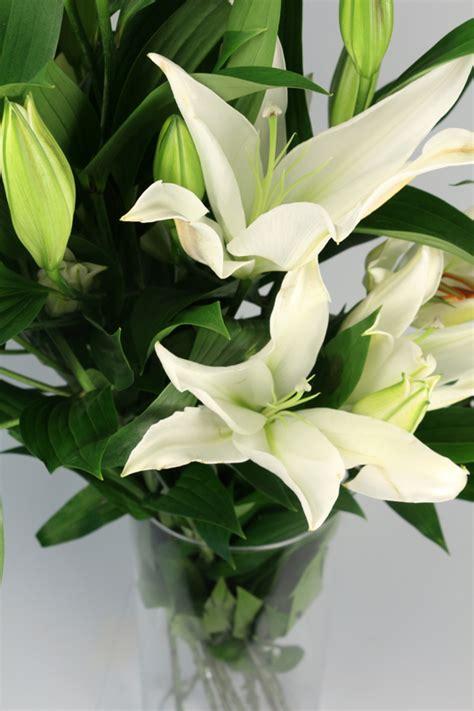 orientali fiori orlandi ingrosso fiori modena lilium orientali orlandi