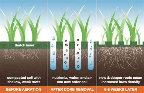 aeration the most beneficial least expensive thing your lawn needs core aeration lawn and