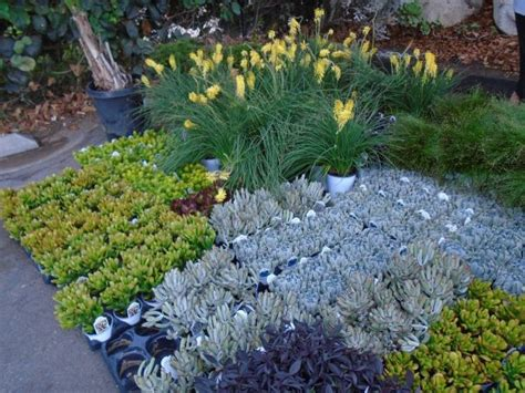 Botanic Garden Plant Sale San Diego Botanic Garden Fall Plant Sale To Return This Weekend Encinitas Ca Patch