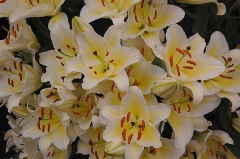 arte fiori arte floreale liturgica regalare fiori arte floreale