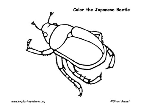 insect coloring pages pdf japanese beetle coloring page