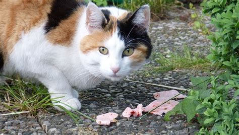 can dogs eat ham can cats eat ham