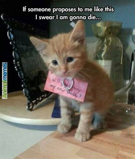 Shaved Cat Meme - 41 best images about cute animal memes on pinterest