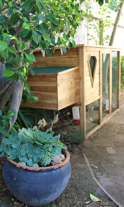 small backyard chicken coops our backyard chicken coop simplified bee
