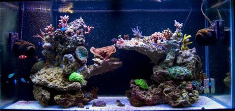 55 gallon live rock aquascape pictures of just your