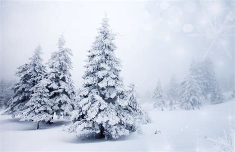 winter snow christmas tree spruce tree nature landscape