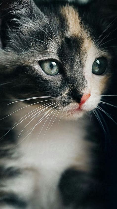 best 25 calico cat names ideas on pinterest