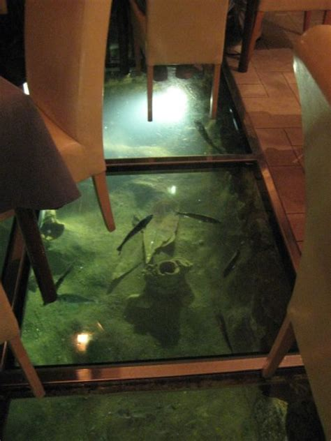 fish tank floor photo