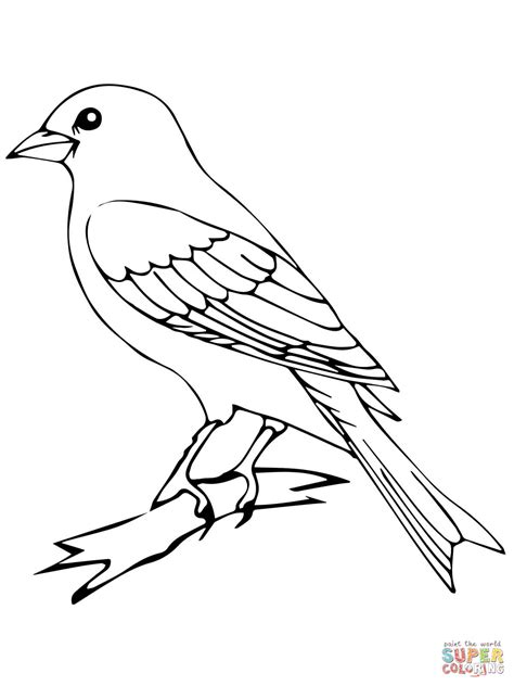 parakeet black and white coloring pages