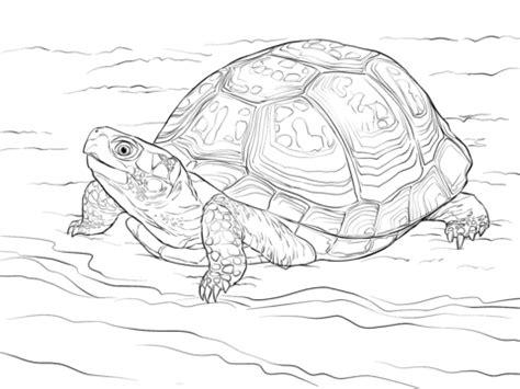 Coloring Box By Dimen Shop dibujos para colorear de tortugas simple cool dibujos