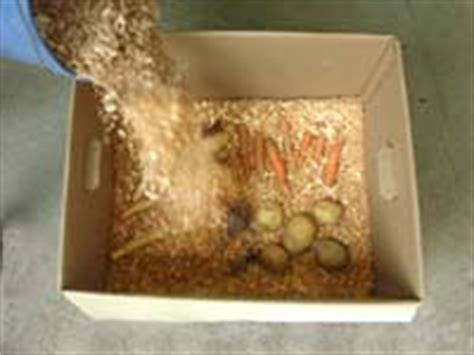 storing root vegetables how to store root crops national gardening association
