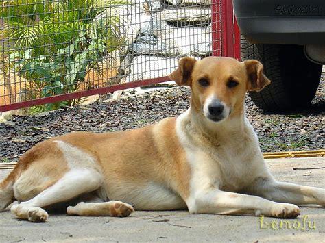 translate vanidad from spanish to english cachorro