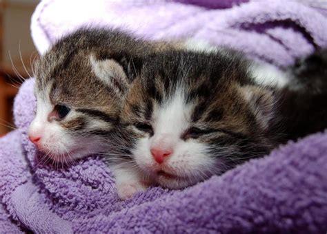 Obat Flu Kucing penyebab dan cara mengobati kucing flu pilek yang