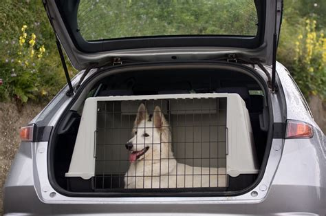 how can a puppy stay in a crate crate dogs guide omlet uk