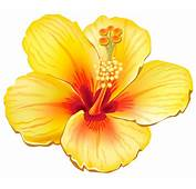 Tropical Flowers Cliparts  Free Download Clip Art