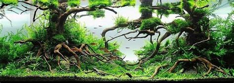 Aquascaping With Driftwood by More Hobbies December 2012